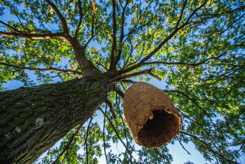 Stort bikupahus på ett träd i skogen royaltyfri bild