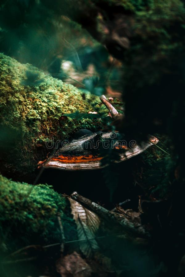 Stort champinjon och träd och golvet fotografering för bildbyråer