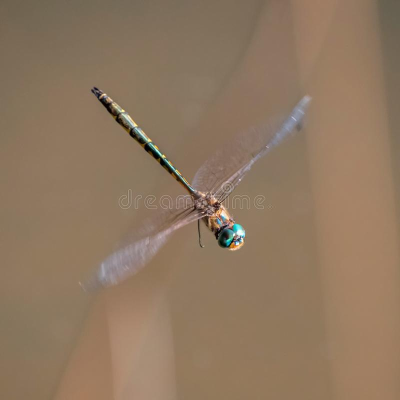 Stort drakeflugaflyg arkivbild