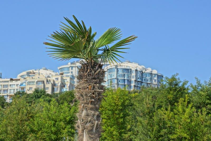 Stort gömma i handflatan och göra grön vegetation och delen av ett vitt hus mot himlen arkivfoton