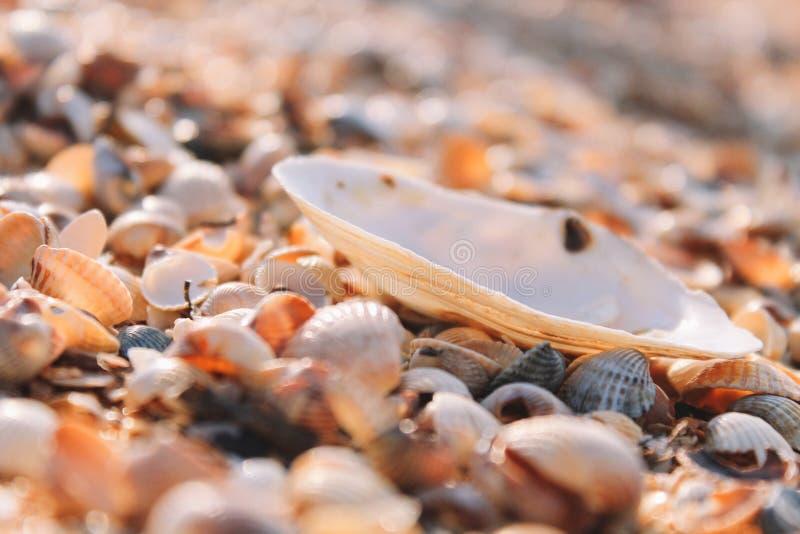 Stort havsskal bland litet royaltyfria foton