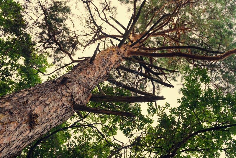stort s?rja treen arkivbilder