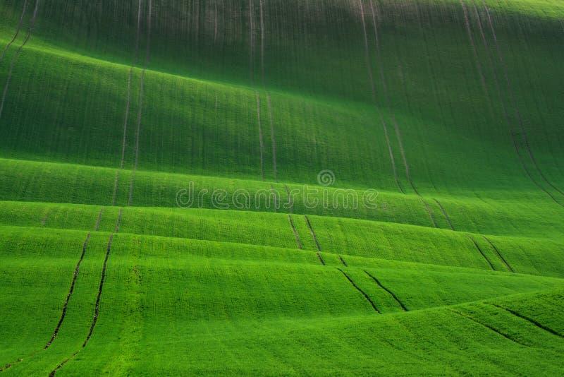 Stort sommarlandskap med veteåkrar Lantligt landskap för naturlig vår i grön färg Grönt vetefält med band och W fotografering för bildbyråer