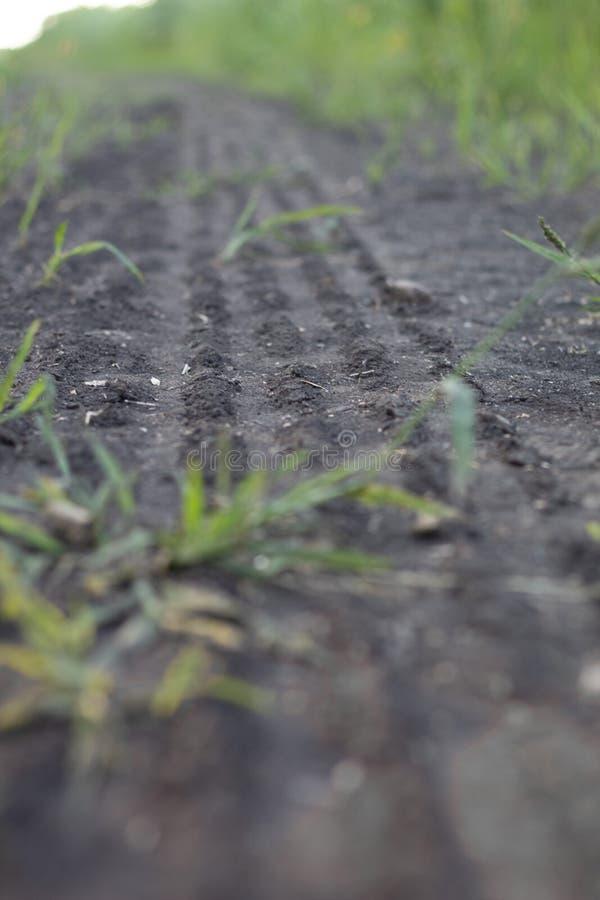 Stort spårar av växtliv på jord fotografering för bildbyråer