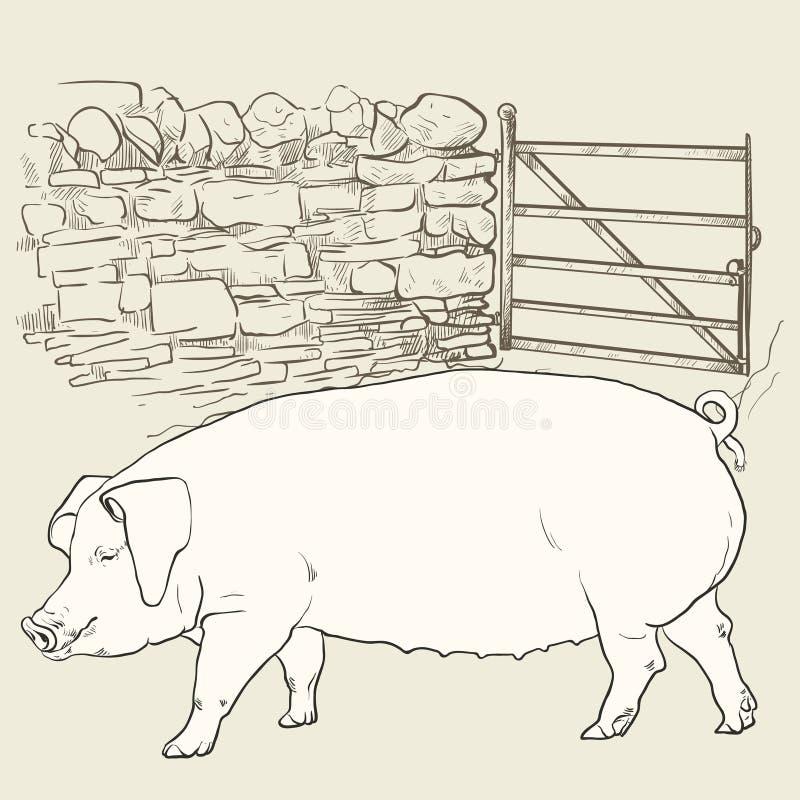Stort svin på porten arkivbilder