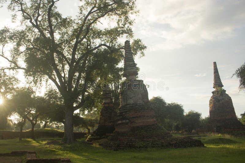 Stort träd bredvid tre Stupas i Wat Phra Si Sanphet i Ayutthaya, Thailand royaltyfri fotografi