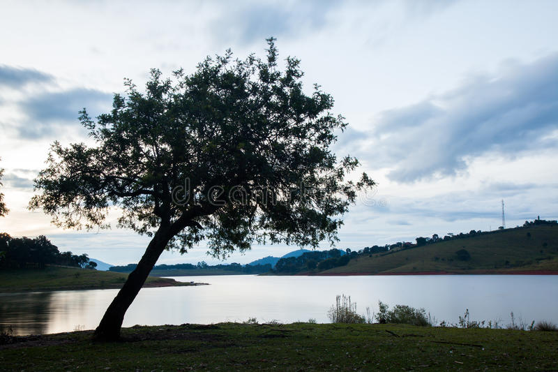 Stort träd i bygdfält med sjövatten på eventiden arkivbild