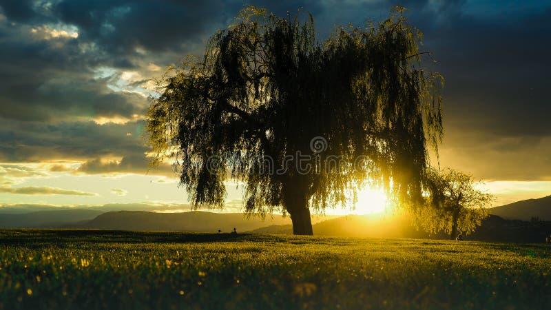 Stort träd i solnedgång royaltyfria foton