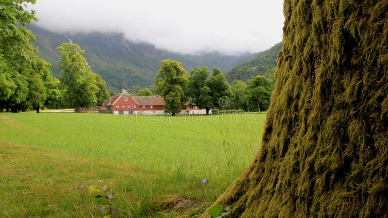 Stort träd med gröna Moss And Field royaltyfri bild