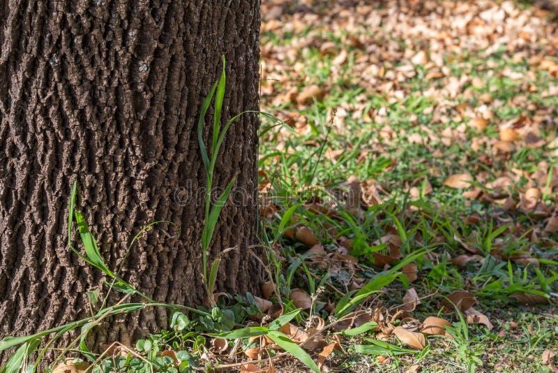 Stort träd med slut för fractalmodellskäll upp, röder a för grönt gräs royaltyfri foto