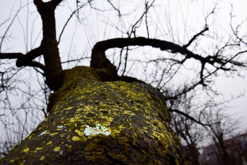 Stort tr?d i en skog royaltyfria bilder