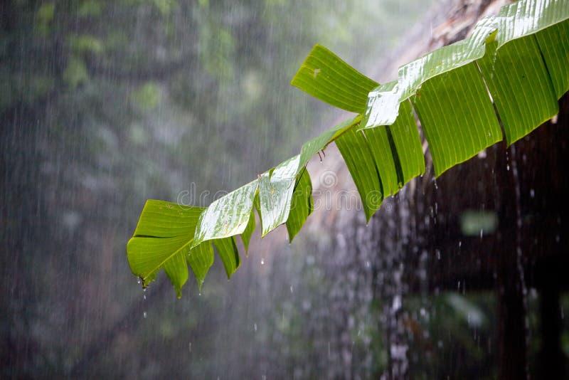 Stortbui in tropische rainfores stock afbeelding