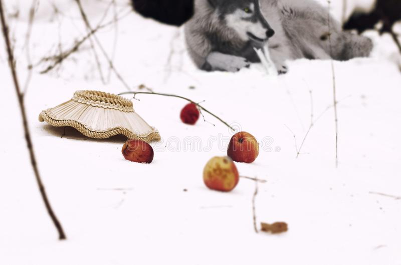Inverted basket with apples. The story of the Red Riding Hood and the Gray Wolf stock image