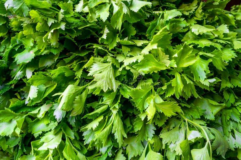 Stos świeży zielony Chiński seler przy badylarki sklepem w lokalnym rynku fotografia stock