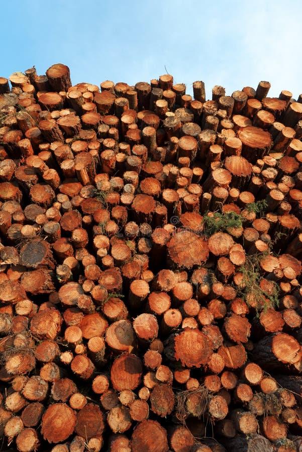 Stos drewno w Landes lasowych obrazy royalty free