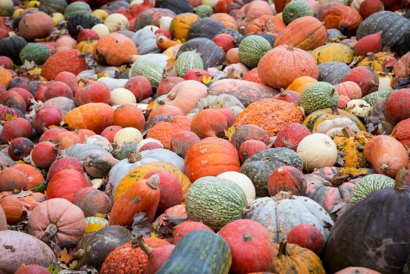 Stos duże kolorowe banie, naturalny karmowy tło zdjęcia royalty free