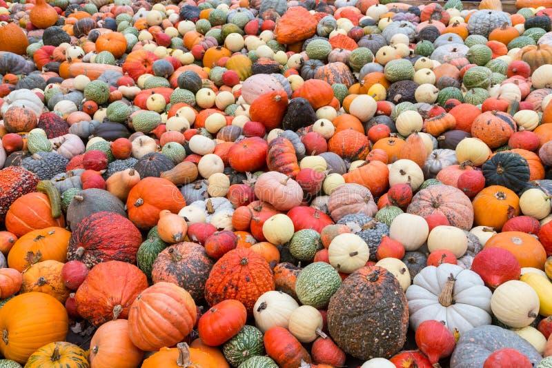 Stos duże kolorowe banie, naturalny tło zdjęcie royalty free