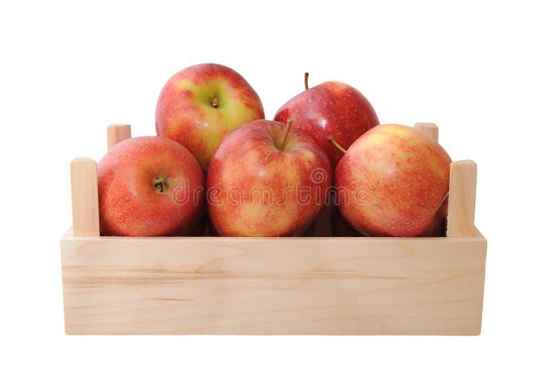 Jonagold jabłka zdjęcie royalty free