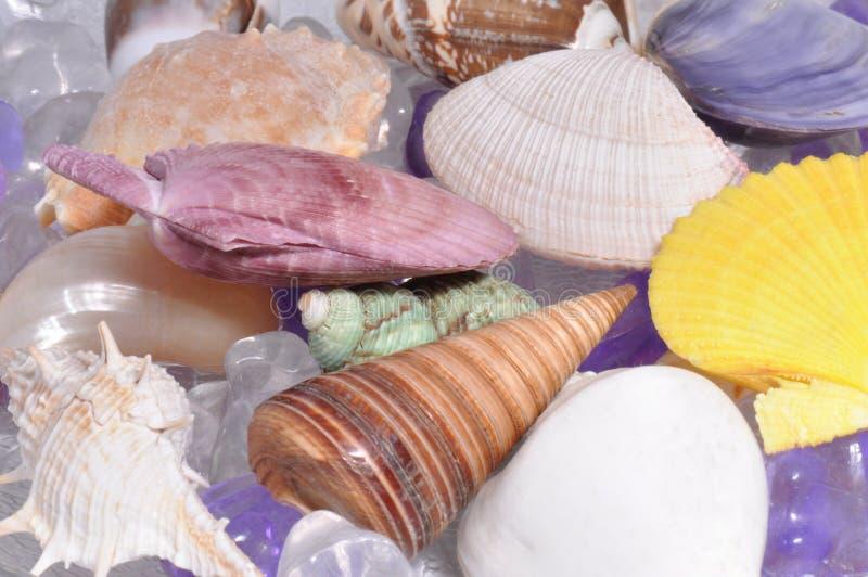 Stos kolorowi czyścić seashells obraz stock
