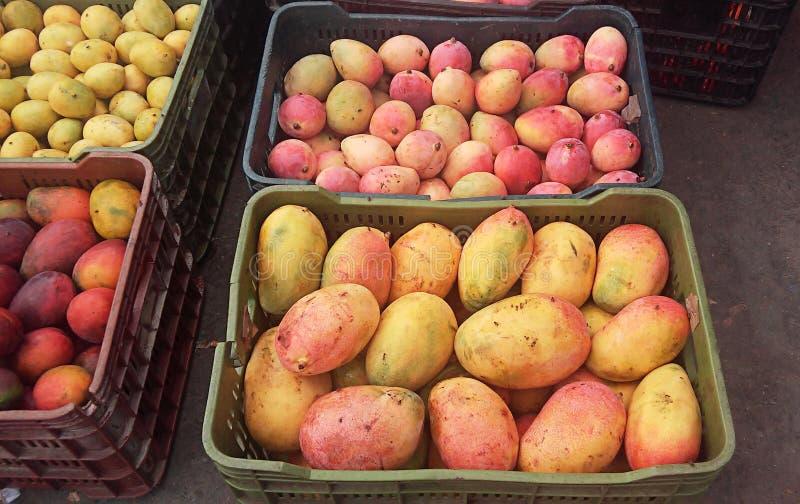 Stos mango wpólnie obraz royalty free