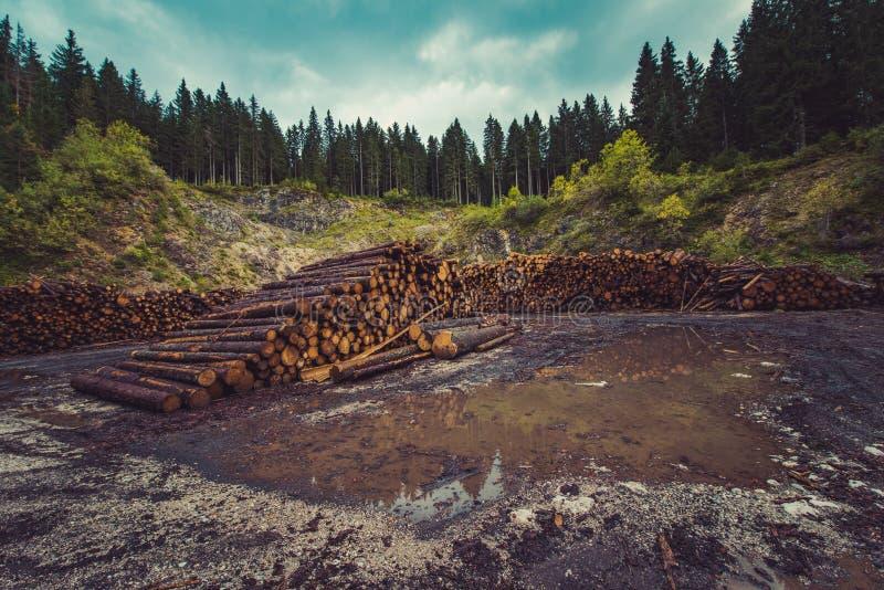 Stos rżnięty drewniany loguje się przemysłowego pole obrazy stock