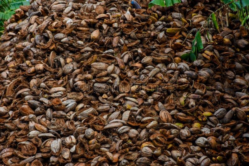 Stos stary brown kokosowy ` s struga obraz royalty free