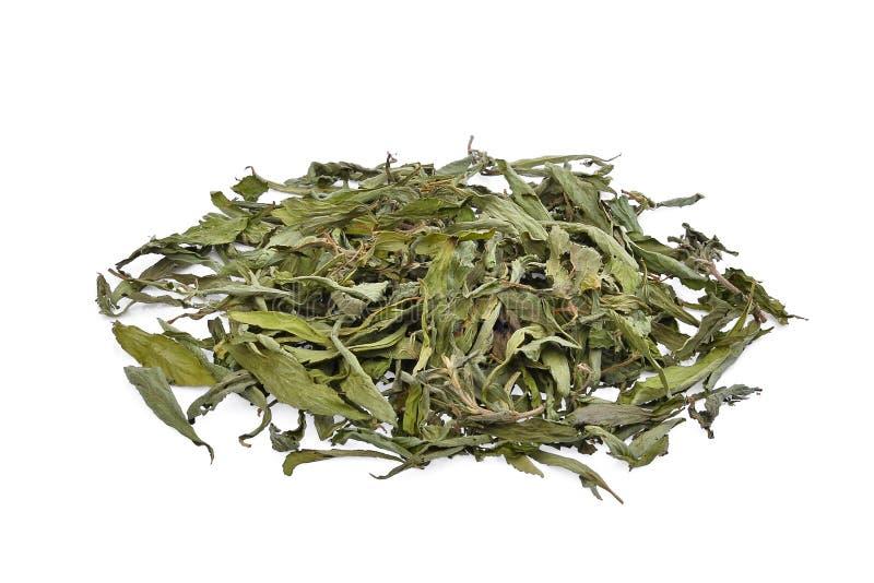 Stos wysuszony stevia rebaudiana bertoni odizolowywający na bielu obrazy royalty free