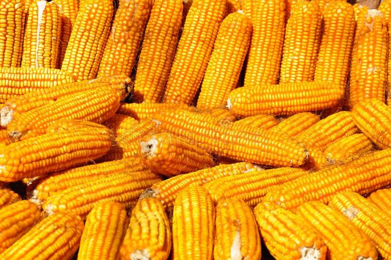 Stos złota kukurudza obrazy royalty free