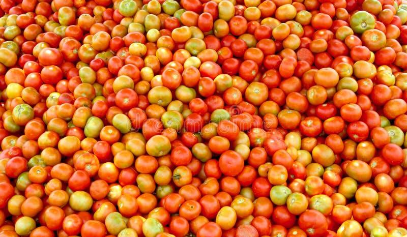 Stos zbierający pomidory w polu zdjęcia stock