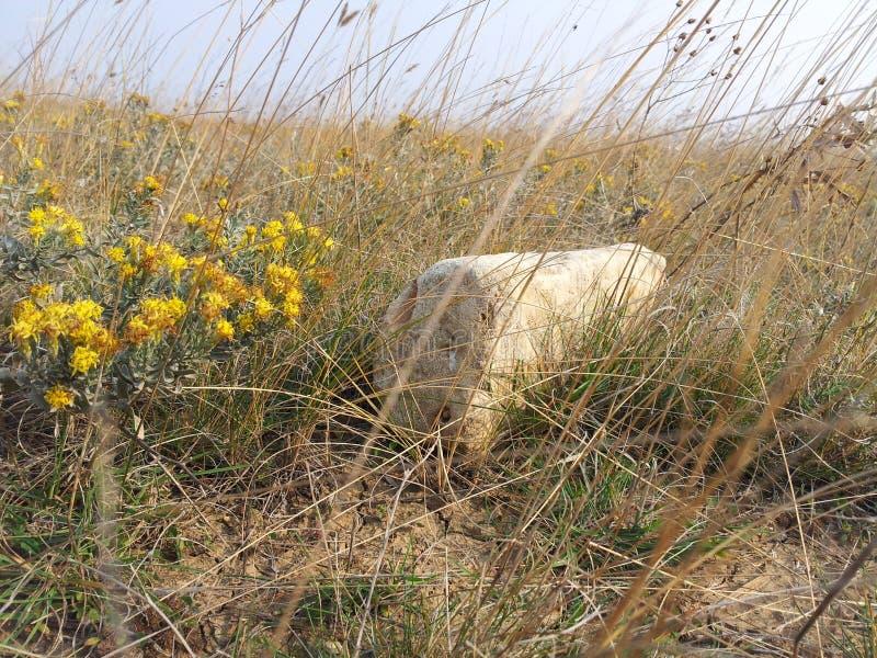 Stoune und Blume lizenzfreie stockfotografie