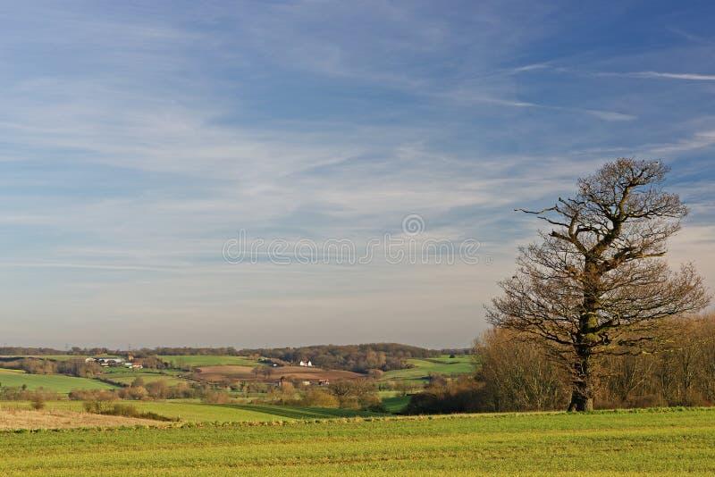 Stour Valley, Reino Unido, no inverno foto de stock royalty free