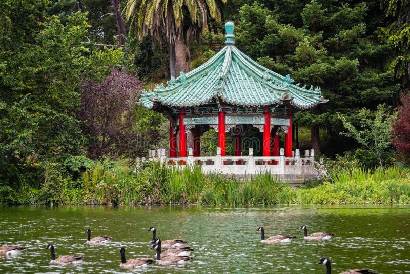 Stow湖海岸线的中国亭子;一个小组加拿大鹅游泳在湖的,金洲公园,旧金山 免版税库存图片