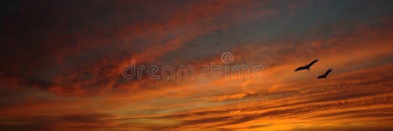 sträcker på halsen den röda skyen arkivbilder