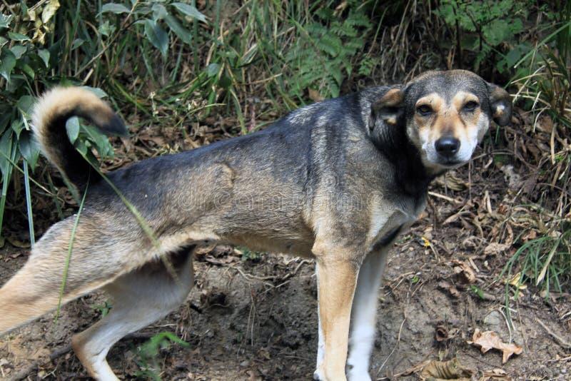 Sträckning av hunden fotografering för bildbyråer