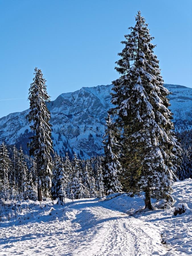 Sträckspår i skogar med snötäckt bergslandskap med solsken royaltyfri bild