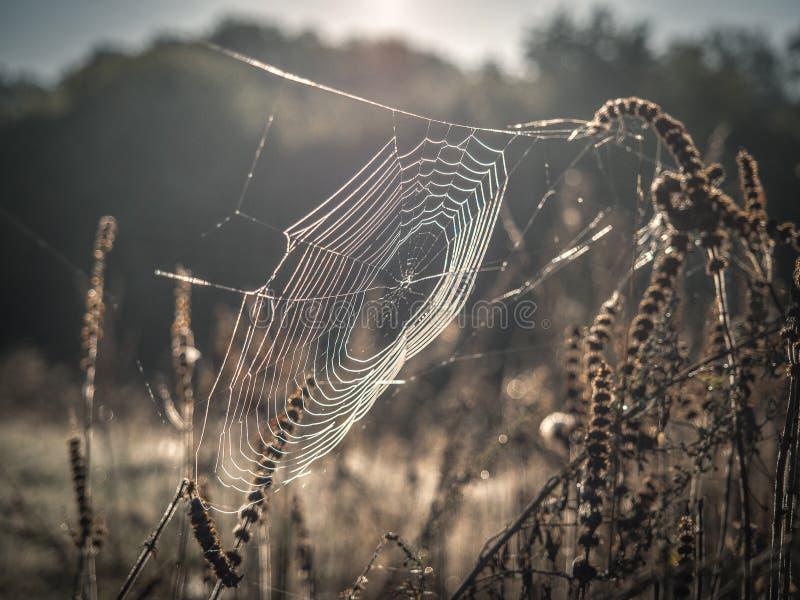 Stränge von spiderweb mit Tautropfen des Sommergrases stockbild