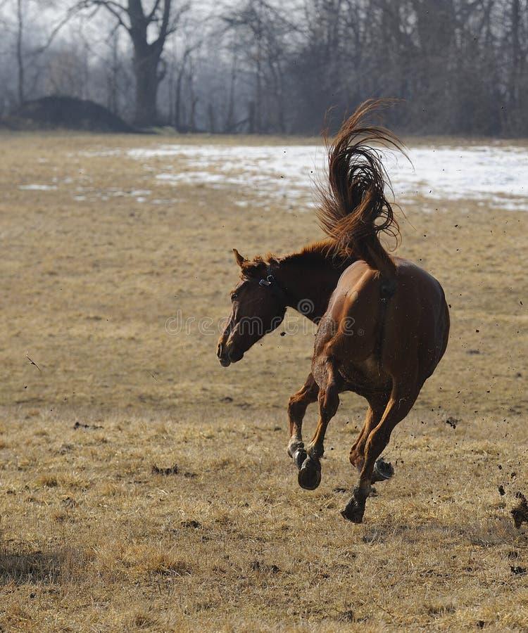 Sträubendes Pferd lizenzfreie stockbilder