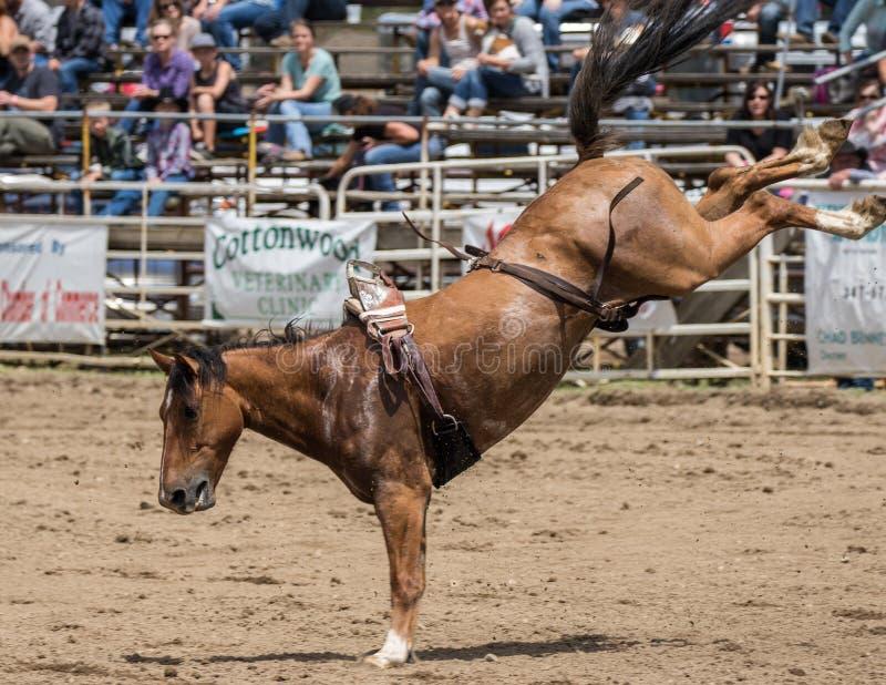 Sträubendes wildes Pferd stockbilder
