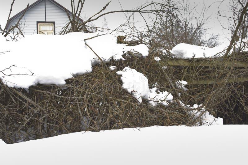 Sträuche unter Schnee stockfotos