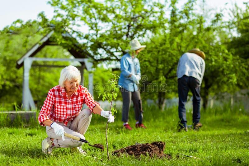 Stråla bärande handskar för kvinna som planterar trädet i trädgård fotografering för bildbyråer