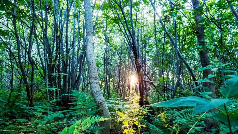 Strålar av solljus bakifrån träden fotografering för bildbyråer
