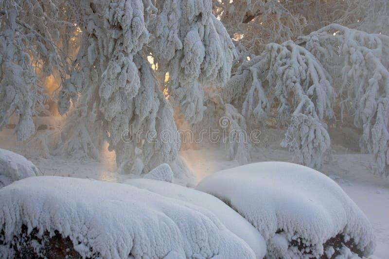 Den Snow täckte treen förgrena sig royaltyfria foton