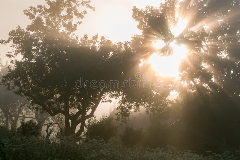 Strålarna av solen sträcker till och med filialerna royaltyfria foton
