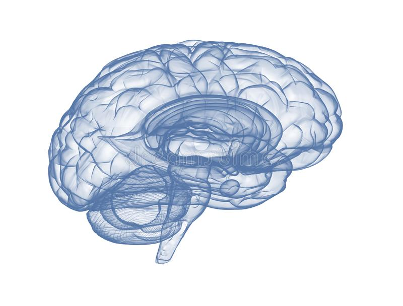 Stråle för mänsklig hjärna x på vit bakgrund royaltyfri illustrationer