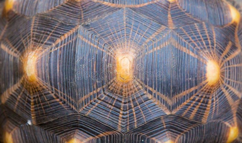 Strålningssköldpadda Shell Texture Pattern fotografering för bildbyråer