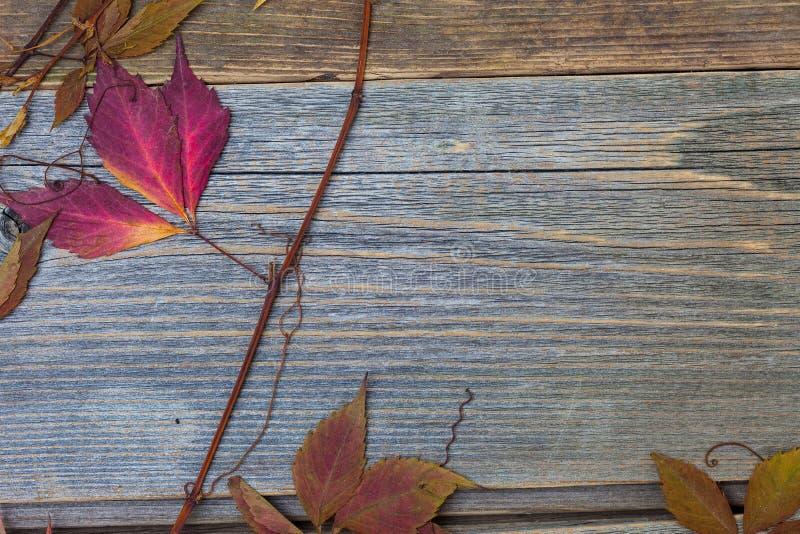 Strålningstid i höst med torra röda blad och grenar royaltyfri fotografi