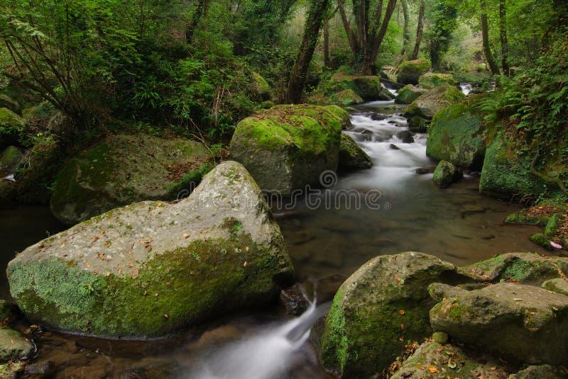Ström av vatten i skog royaltyfri fotografi