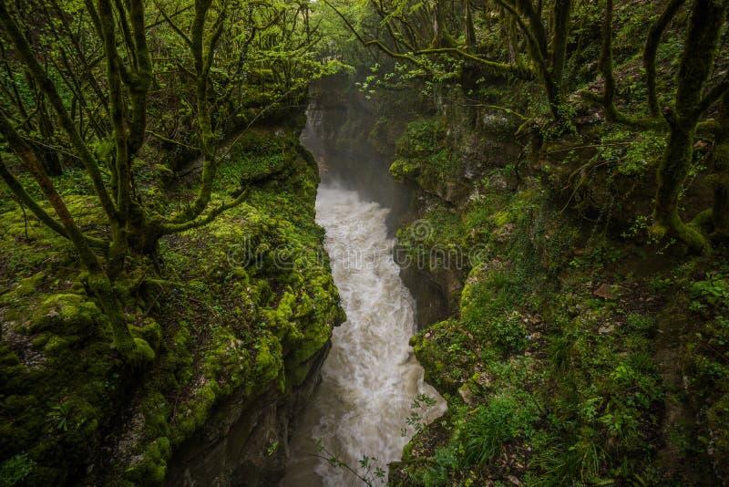 Ström för Martvili kanjonvatten till och med skog fotografering för bildbyråer