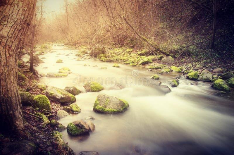 Ström i skog fotografering för bildbyråer