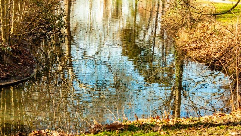 Ström med kristallklart vatten med reflexioner av träd och växter royaltyfri fotografi